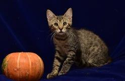 striped котенок и тыква Стоковое Изображение