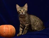 striped котенок и тыква Стоковые Фотографии RF