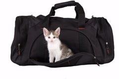 striped котенок мешка Стоковые Фотографии RF