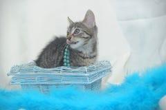 striped котенок на светлой предпосылке Стоковая Фотография