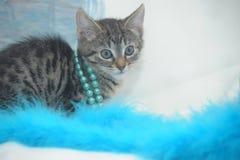 striped котенок на светлой предпосылке Стоковые Изображения