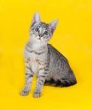 Striped котенок сидя на желтом цвете Стоковые Фото