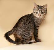 Striped котенок сидя на желтом цвете Стоковые Изображения RF