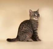 Striped котенок сидя на желтом цвете Стоковая Фотография