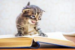 Striped котенок с голубыми глазами сидит на книге Ребенок с b Стоковое фото RF