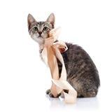Striped котенок с лентой Стоковая Фотография RF