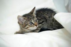 Striped котенок Стоковые Фото