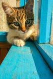 Striped котенок Стоковое Изображение