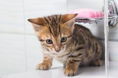 Striped котенок redhead в играть ванной комнаты стоковые изображения rf