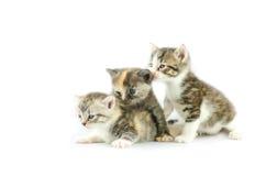 3 striped котят Стоковые Изображения