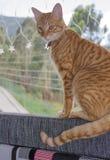 Striped кот в окне Стоковая Фотография
