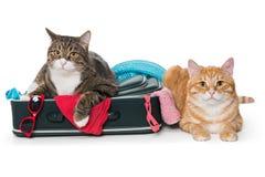 2 striped кот лежа с чемоданом Стоковая Фотография
