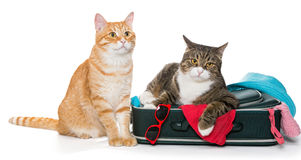 2 striped кот лежа с чемоданом Стоковая Фотография RF