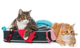 2 striped кот лежа с чемоданом Стоковое Изображение