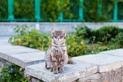 Striped кот смотря камеру стоковые фото