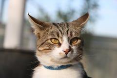Striped кот усика Стоковые Фотографии RF