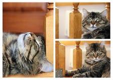striped кот фото Стоковое Фото