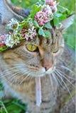 striped кот Стоковые Изображения