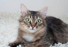 Striped меховой кот лежит на искусственном половике меха Стоковые Фотографии RF