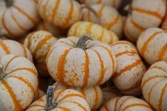 Striped миниатюрные тыквы Стоковые Фото