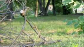Striped муха завиша в воздухе видеоматериал