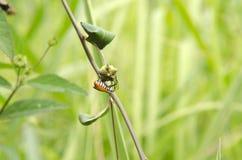 Striped насекомое Стоковая Фотография RF