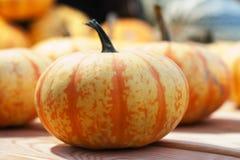 Striped оранжевая тыква цвета на деревянной предпосылке Съемка селективного фокуса Стоковое Изображение