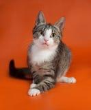 Striped при белый котенок сидя на апельсине Стоковые Изображения RF