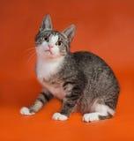 Striped при белый котенок сидя на апельсине Стоковое Изображение