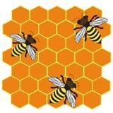 3 striped пчелы Стоковая Фотография RF