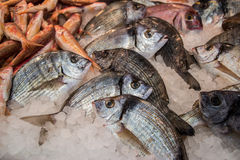 Striped рыбы леща на льде для продажи Стоковая Фотография RF