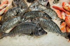 Striped рыбы леща на льде для продажи Стоковое Изображение RF