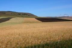 striped сельское поля Стоковое Изображение RF