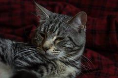 Striped серый кот лежит на половике Стоковая Фотография RF
