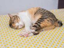 Striped сон кота на кровати Стоковая Фотография RF