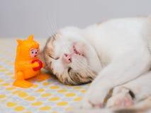 Striped сон кота с игрушкой на кровати Стоковые Фото