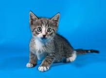 Striped с белизной устрашил котенка сидя на сини Стоковые Изображения