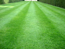striped трава стоковая фотография rf
