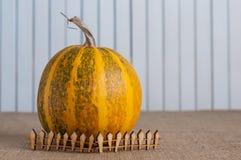 Striped тыква за загородкой игрушки деревянной _ Стоковые Фотографии RF