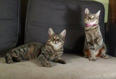 2 striped устрашенный котенок сидя на кресле Стоковое Изображение