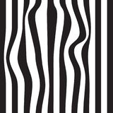 Striped abstract background. black and white zebra print. Vector seamless illustration. eps10. Striped abstract background. black and white zebra print. Vector Stock Photography