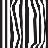 Striped abstract background. black and white zebra print. Vector seamless illustration. eps10. Striped abstract background. black and white zebra print. Vector Royalty Free Stock Photography