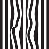 Striped abstract background. black and white zebra print. Vector seamless illustration. eps10. Striped abstract background. black and white zebra print. Vector Royalty Free Stock Photo