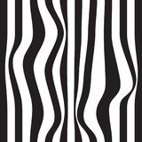 Striped abstract background. black and white zebra print. Vector seamless illustration. eps10. Striped abstract background. black and white zebra print. Vector Royalty Free Stock Image