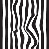 Striped abstract background. black and white zebra print. Vector seamless illustration. eps10. Striped abstract background. black and white zebra print. Vector Stock Images