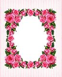 Striped background with pink rose flowers vertical frame. Pink rose flowers vertical frame on white and striped background royalty free stock photo