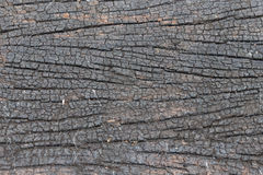 Striped bark background Stock Photography