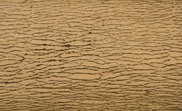The striped bark. Use as background patterned wood variety, varies. royalty free stock photos