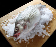 Striped bass 2. Striped bass on ice atop a wood cutting board Stock Photography