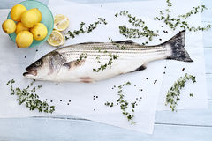 Striped Bass Dinner. Freshly caught striped bass being prepared for dinner Stock Image